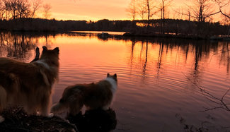 Photo of Tristan and Tillie watching the sun rise